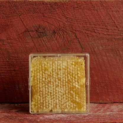 Two Beekeepers Cut Comb